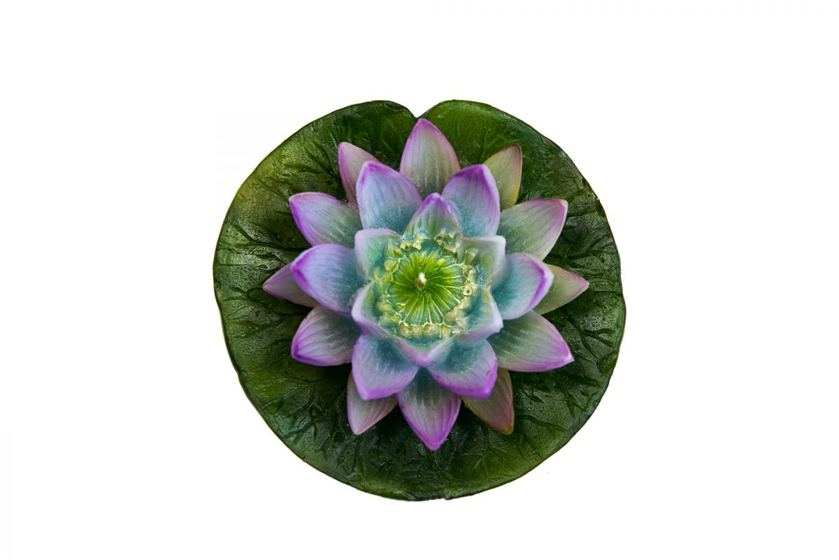 Water lily on a leaf c flowers decorative manos candles izmirmasajfo